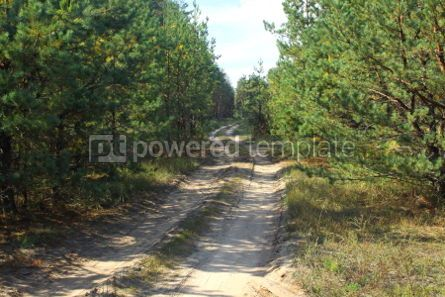 Nature: Summer pinewood with road #04601