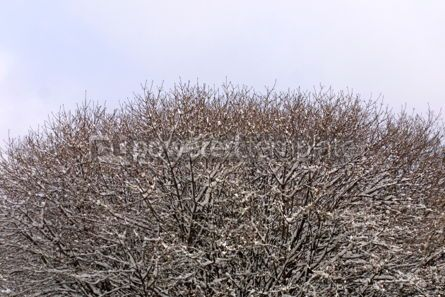 Nature: Close-up frozen trees #04664