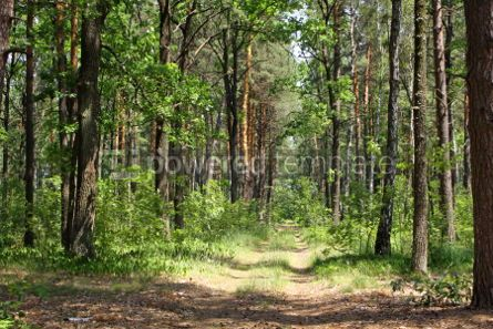 Nature: Summer mixed forest with walkway green grass and trees #04674