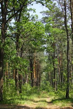 Nature: Summer mixed forest with walkway green grass and trees #04675