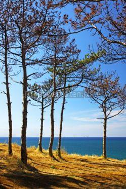 Nature: Summer sea landscape with pine-trees. Crimea Ukraine #04687