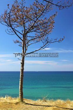 Nature: Summer sea landscape with pine-tree #04688