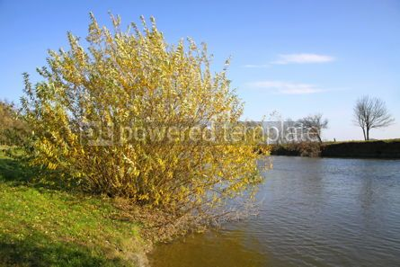 Nature: Picturesque autumn landscape of river and bright yellow trees an #04692
