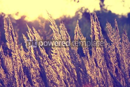 Nature: Close-up dry grass field over setting sun background #04703