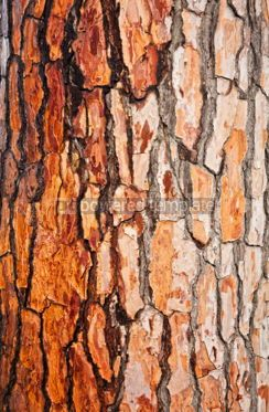 Nature: Brown bark of pine tree #04706