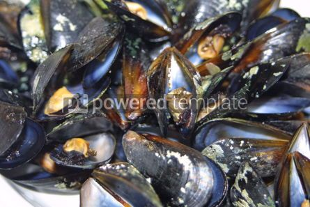 Food & Drink: Close-up opened boiled small mussels #04717
