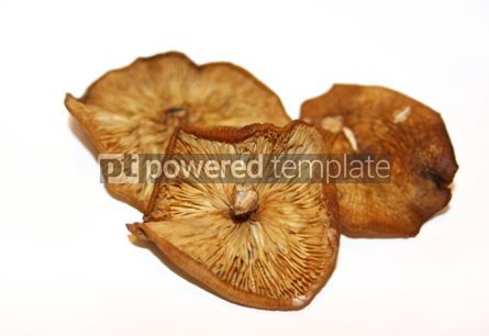 Food & Drink: Dried agaric honey mushrooms on a white background #04722