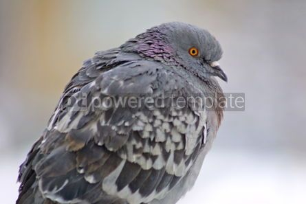 Animals: close-up pigeon on a perch #04725
