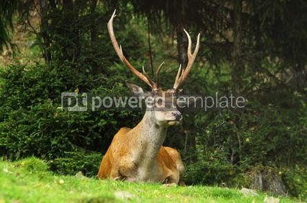 Animals: Portrait of a wild deer #04727