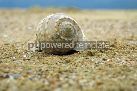Animals: Seashell on the sand beach. Pakbara Thailand #04730
