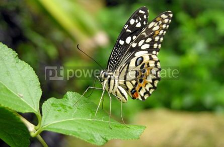 Animals: Butterfly    #04731