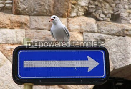 Animals: Seagull seats on a road sign #04734