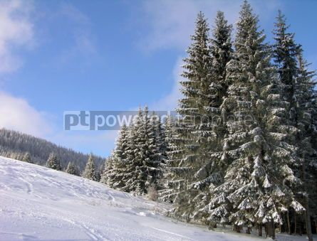 Nature: Winter in Carpathian mountains #04808