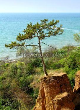Nature: Summer landscape  #04816