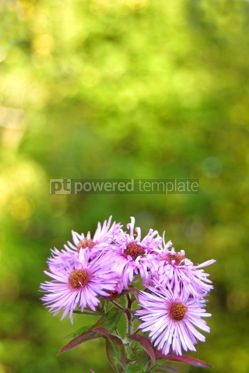 Nature: Purple flowers #04826