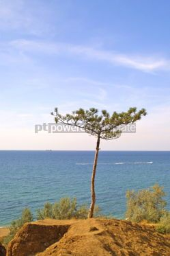 Nature: Summer landscape of the sea #04827