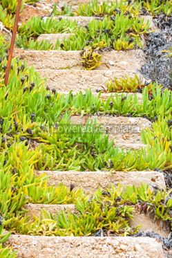 Nature: Old ruined concrete stairs at the beach Halkidiki Greece #04886