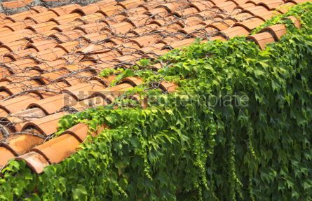 Nature: A red tile roof with branches of plodding ivy #04974