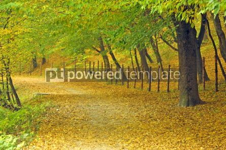 Nature: Autumn in the park #05090