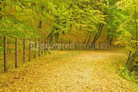 Nature: Autumn in the park #05091