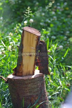 Nature: Piece of billet in the garden #05107