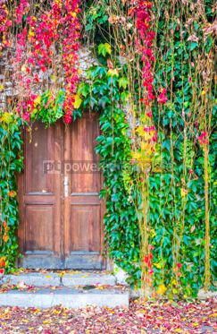 Architecture : Ivy growing on a wall surrounding old wooden door #05212