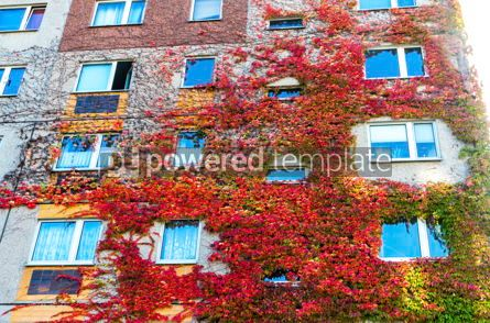 Architecture : Ivy growing on a building walls #05215