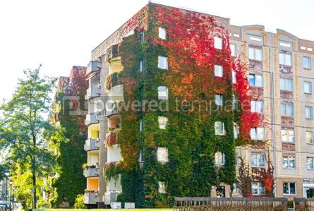Architecture : Ivy growing on a building walls #05216