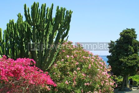 Nature: Flowers in Cannes #05359