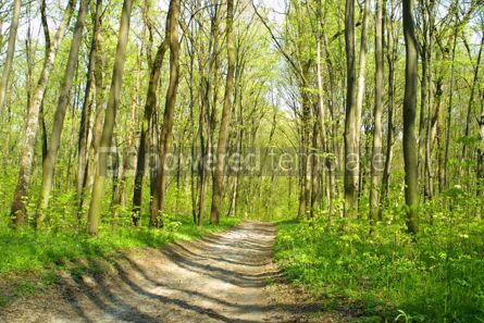 Nature: Spring forest #05368