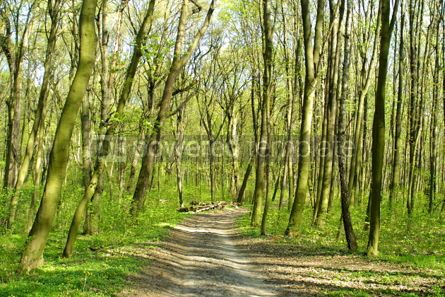 Nature: Spring forest #05369