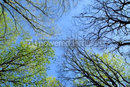 Nature: Spring forest #05370