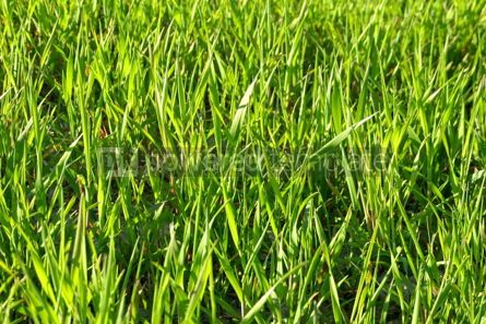 Nature: Green grass background #05377