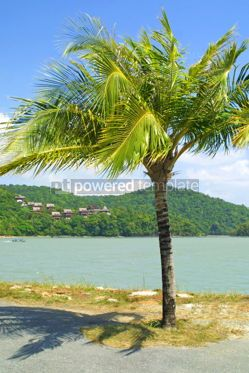 Nature: Tropical landscape with palm-tree. Langkawi island Malaysia #05378