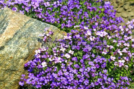 Nature: Small spring tender flowers #05386
