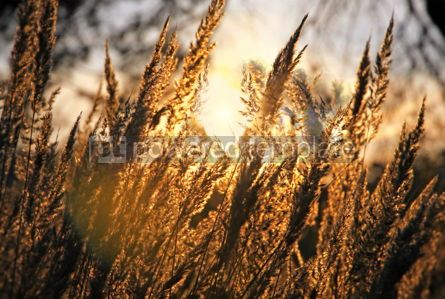 Nature: Yellow dry grass at the meadow #05399