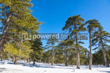 Nature: Winter landscape in Troodos Mountains Cyprus #05576