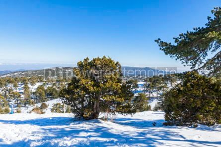 Nature: Winter landscape in Troodos Mountains Cyprus #05578