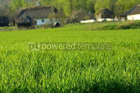 Nature: Meadow with green grass #05729