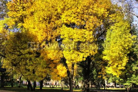 Nature: Picturesque autumn trees in the garden #05730