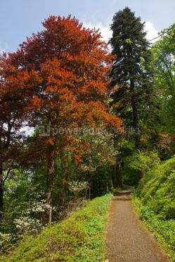 Nature: Colourful trees in the forest #05749