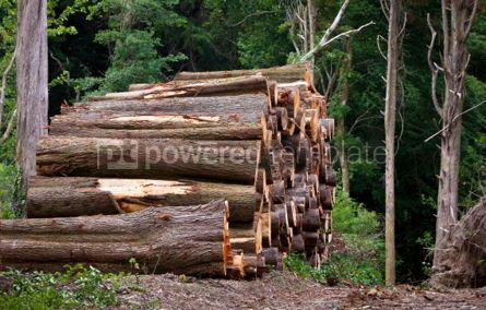 Nature: Pile of raw pine wood logs #05751