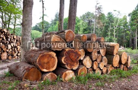 Nature: Pile of raw pine wood logs #05752