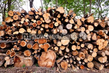Nature: Pile of raw pine wood logs #05753