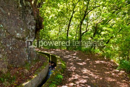 Nature: Hiking along irrigation canals ( Levada) Madeira Portugal #05757