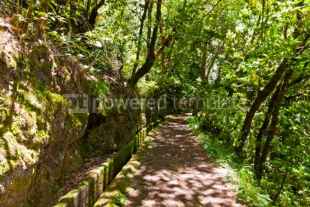 Nature: Hiking along irrigation canals ( Levada) Madeira Portugal #05758
