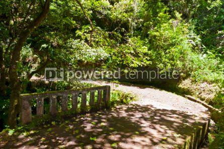 Nature: Hiking along irrigation canals ( Levada) Madeira Portugal #05759