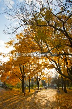 Nature: Picturesque autumn trees in the garden #05776
