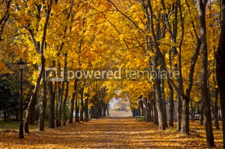 Nature: Garden walkway with picturesque autumn trees #05777
