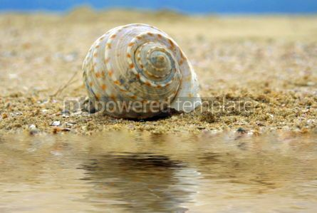Nature: Seashell  #05804
